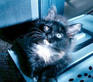 black kitten looking up