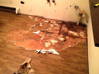 Moldy plywood floor.