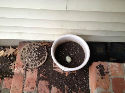 Flower pot with duck egg inside.