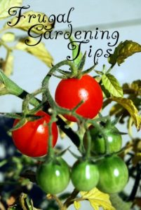 Frugal Gardening Tips