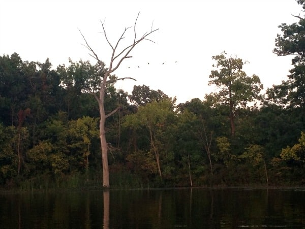 A dead tree next to a body of water.