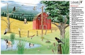 FREE Backyard Bird Identification Poster!