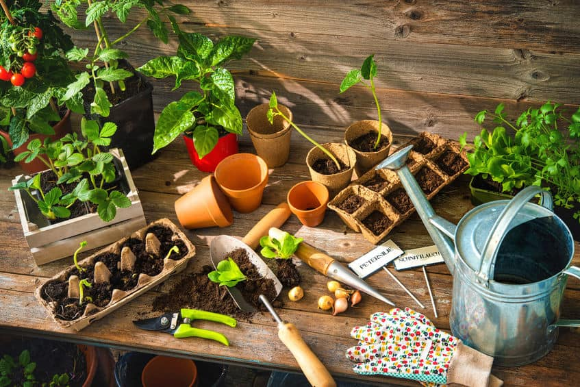 An assembly of gardening supplies, including tools, plants, and dirt.