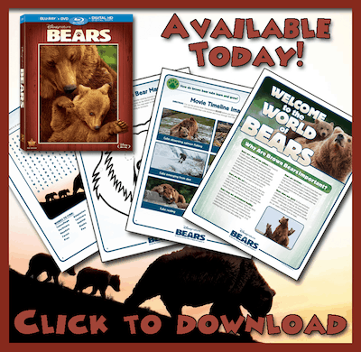 Disneynature\'s Bears Activity Guide