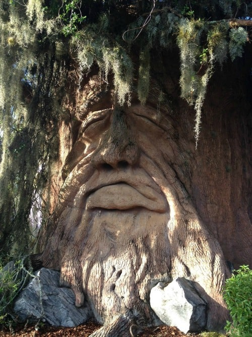 A face engraved into a tree. Give Kids the World Changes Lives