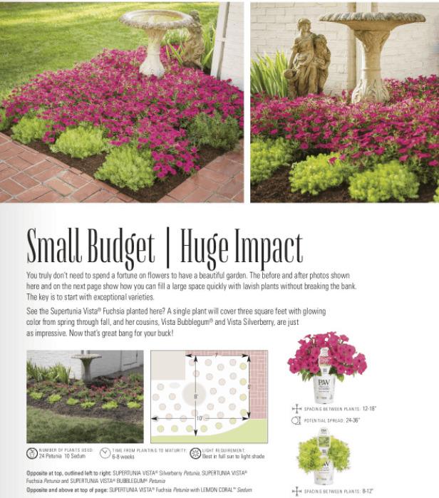 Small budget garden.