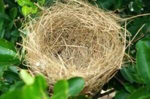empty nest syndrome stories