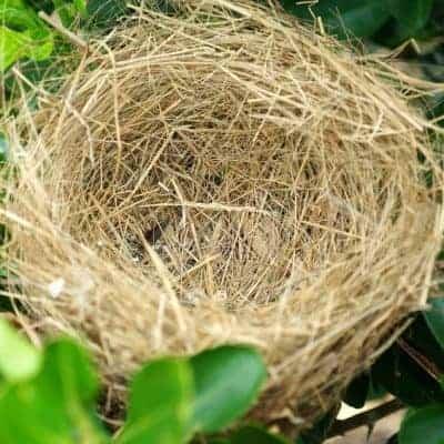 empty nest syndrome stories