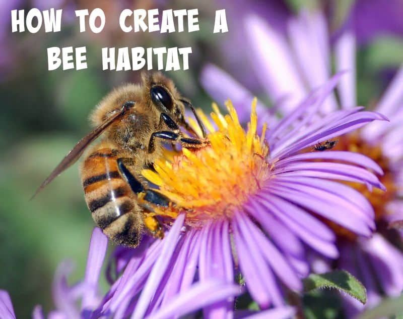 How to create a bee habitat.