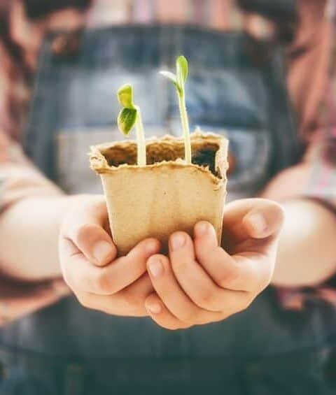 Free Kids Gardening Curriculum