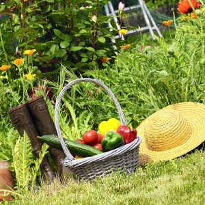 Grow More by Setting Gardening Goals