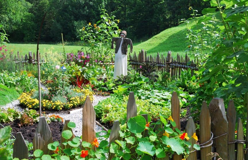 How To Make A Kitchen Garden