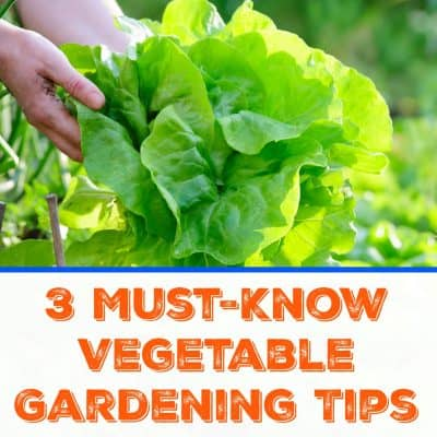 Gardening Tips of House Dictionary Design