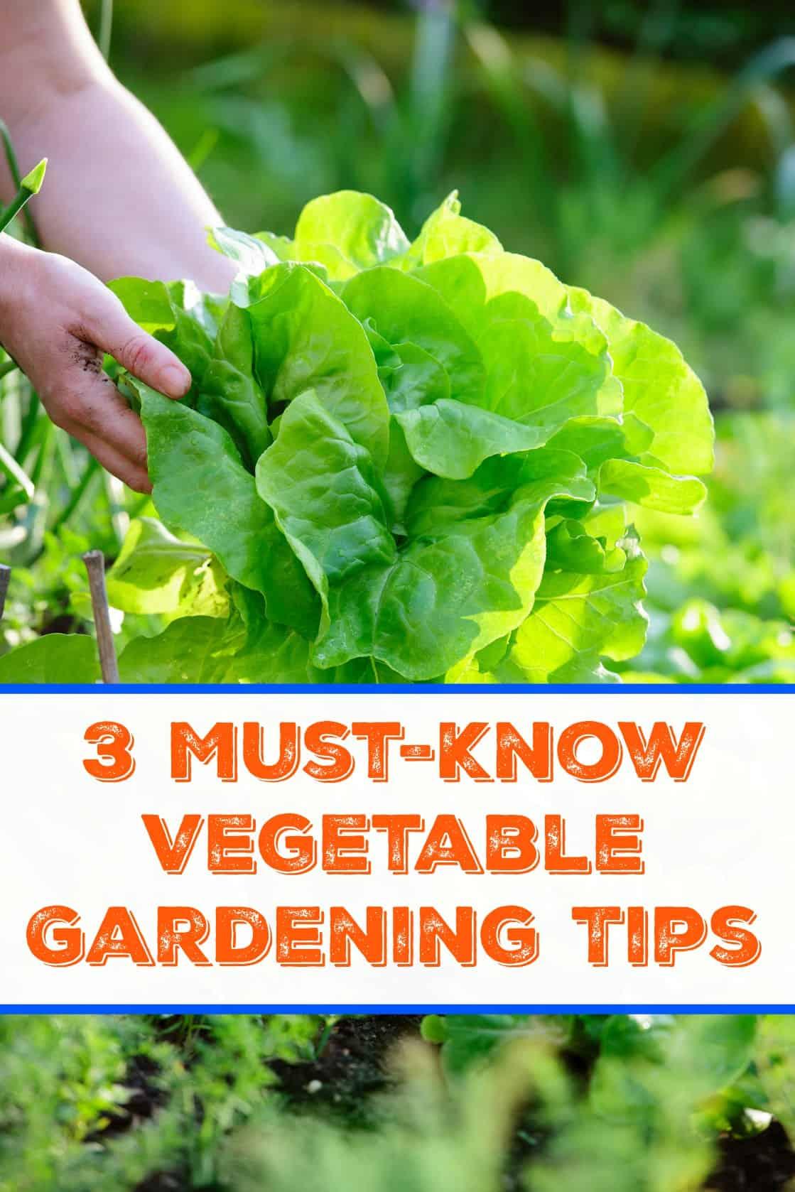 3 Must Know Veggie Garden Tips
