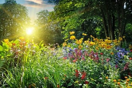 Gardens You Can Grow to Combat Stress