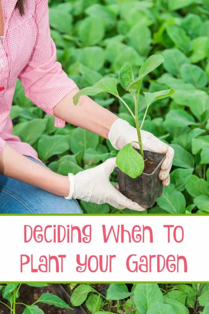 Deciding When  to plant your garden