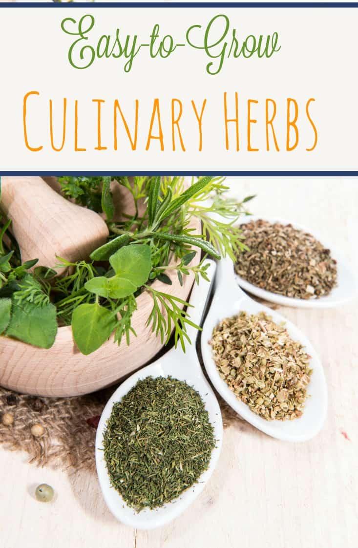 Easy to Grow Culinary Herbs
