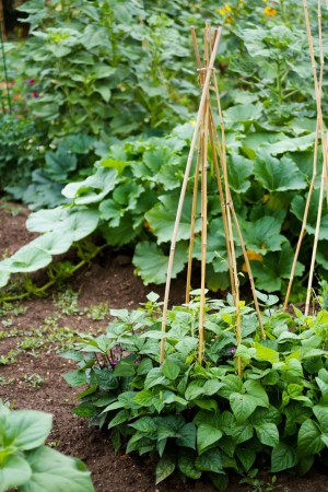 Grow healthier plants with vertical gardening.