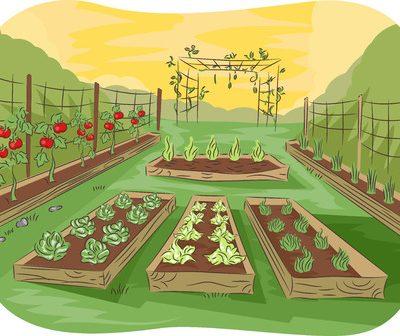 How to Grow a Verticle Garden