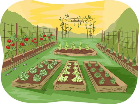 36815830 - illustration of a kitchen garden lined up with fruits and vegetables