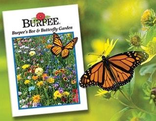 pollinator_webimage