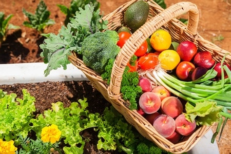 33276665 - basket of fresh organic fruit and vegetables in garden