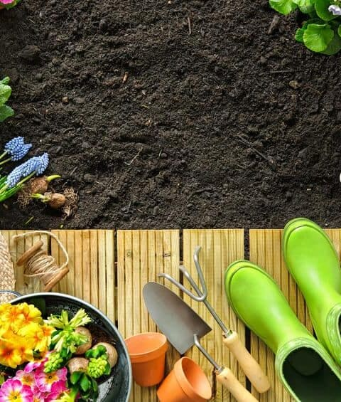How Gardening is Good for Your Health!