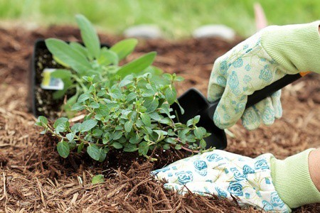 Easy Ways to Extend Your Vegetable Growing Season