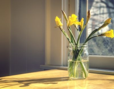 18996196 - daffodils in glass mason jar