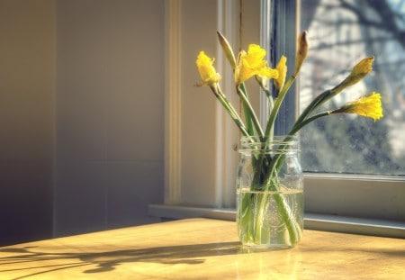 18996196 - daffodils in glass mason jar
