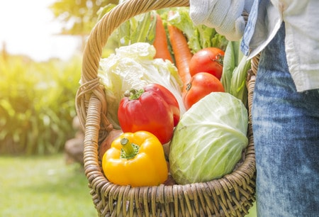 31095266 - woman wearing gloves with fresh vegetables in the basket in her hands. close up