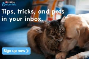 How to Save on Pet Products