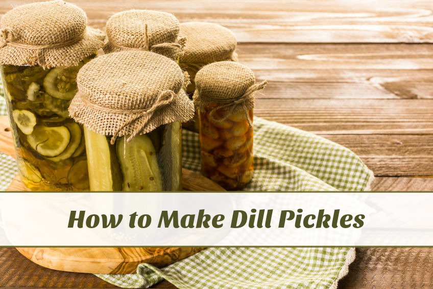 how to make dill pickles at home
