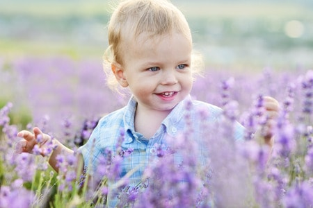 39160121 - baby boy in the lavender summer field