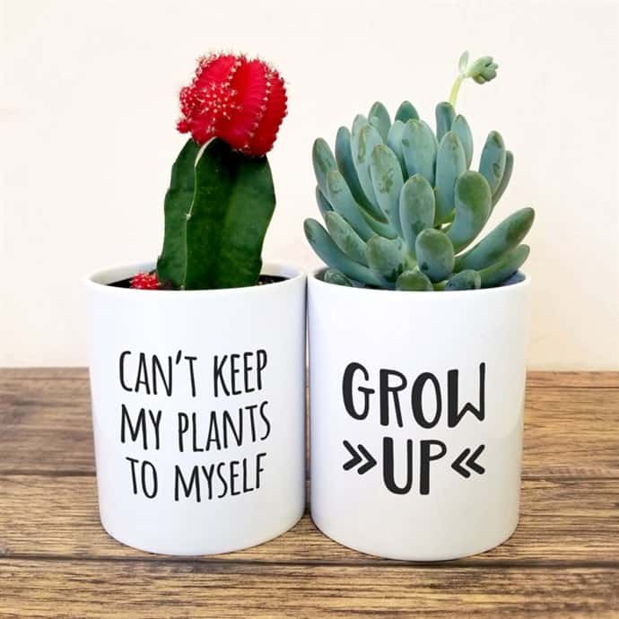 Fun Succulent Planters You Have To See