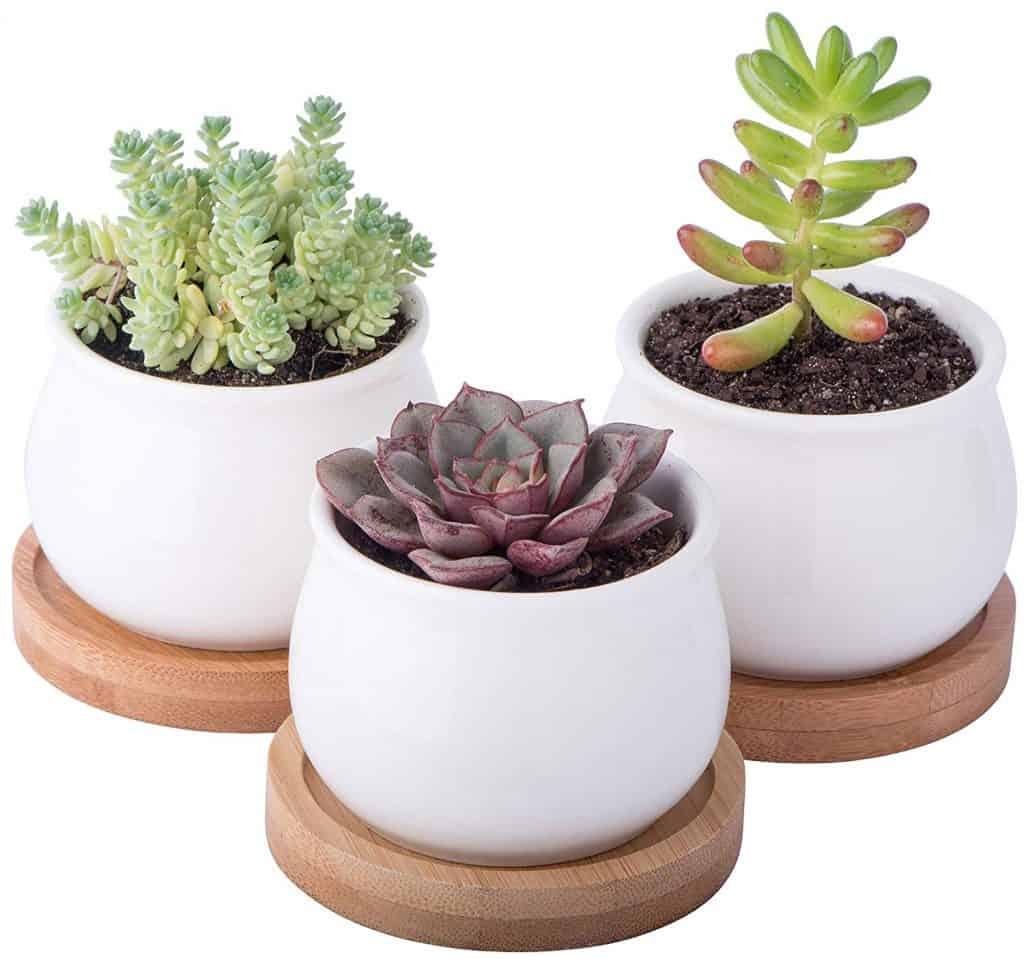 succulent planter pot set