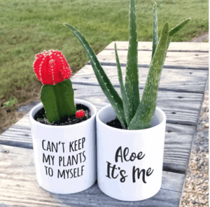 Succulent Planters $9.99