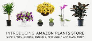 New Amazon Plants Store Delivers to Your Home