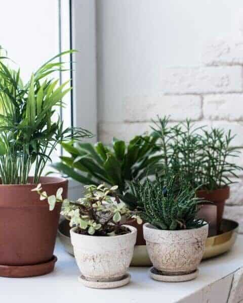 group of different kinds of house plants in pots sitting together