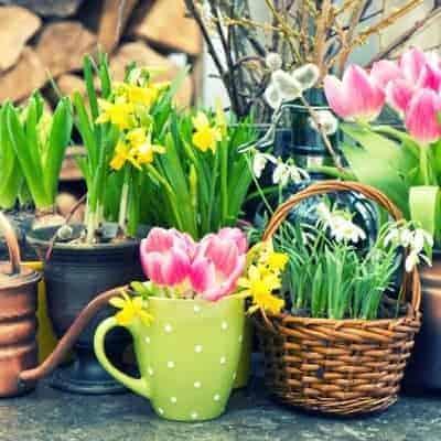Springtime Essential Oil Diffuser Recipes