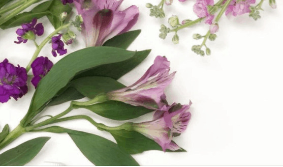 Purple flowers on the table.