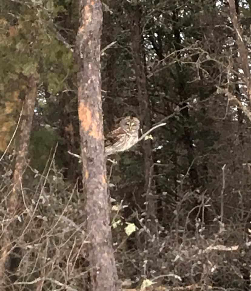 An owl in the tree.