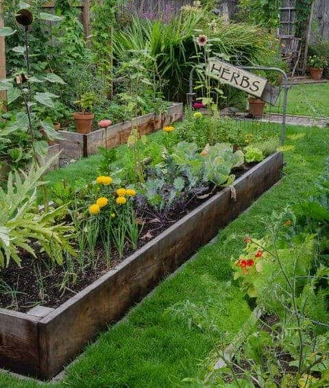 A variety of plants from a vegetable garden.