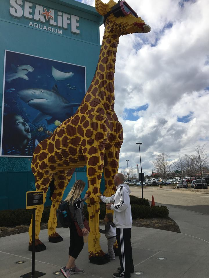 A giraffe standing next to a statue of a person