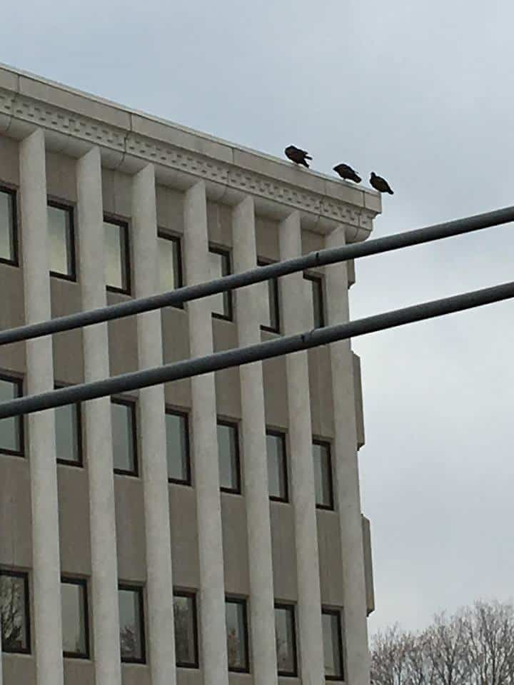 A tall building with crows on top.