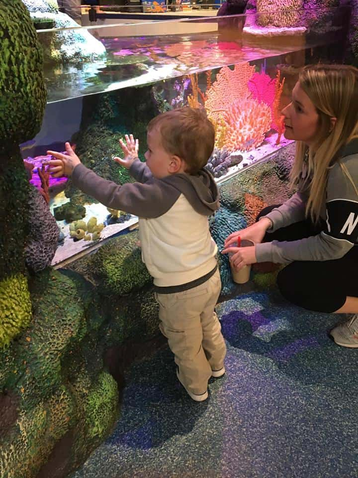 A young lady and little boy looking at fishes and other water creatures.