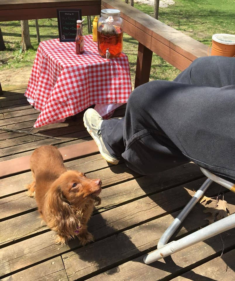 Dog begging for delicious picnic food.