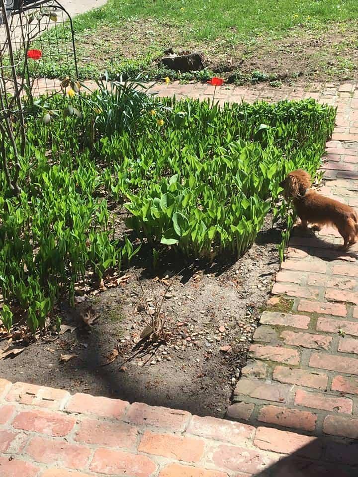 A dog in a garden
