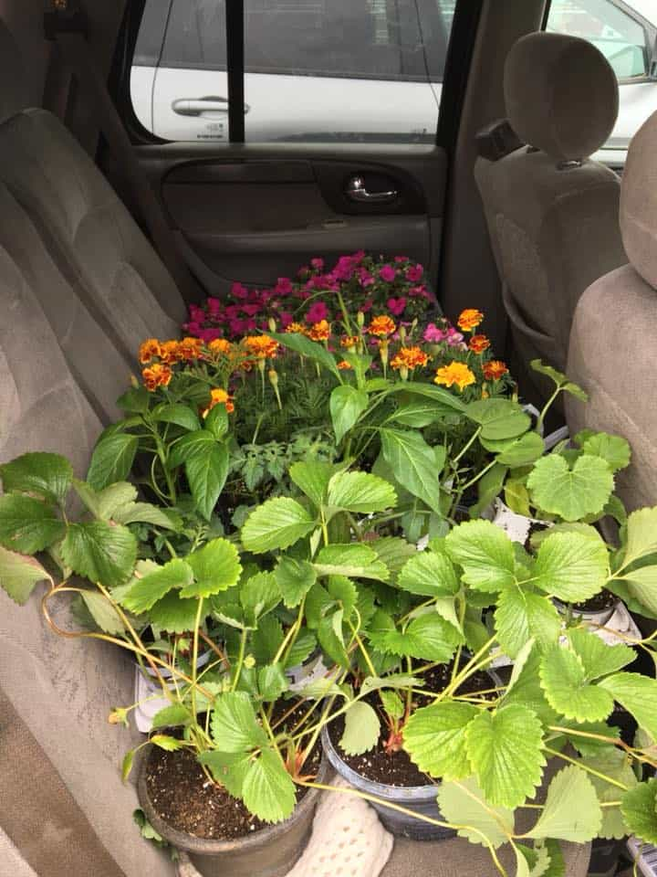 A bundle of flowers and plants in the back seat of the car.