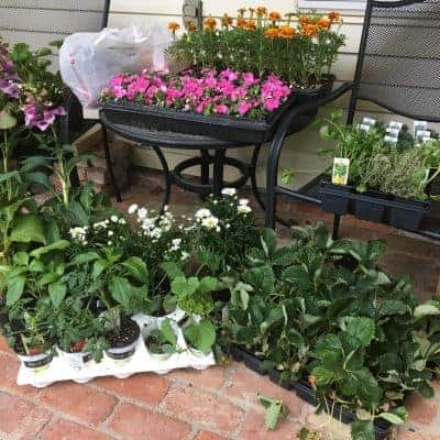 Monday Meanderings: Flower Day Edition